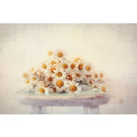 Daisies on a Stool Canvas Wall Art