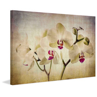 Pale Orchids Wide Canvas Wall Art