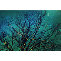 Magical Night Canvas Wall Art